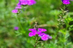 花と蝶CMXXVIII!