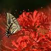 花と蝶CMLVI!