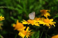 花と蝶CMXLI!