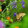 花と蝶MCCCLVIII!