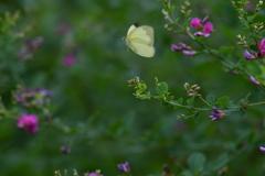 花と蝶MDCCXVIII!