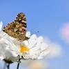 花と蝶CDLXXI!