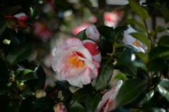 季節の花CCCXXX!
