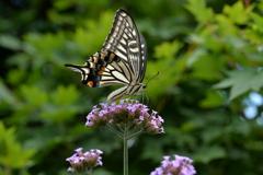 花と蝶MCCXLVIII!
