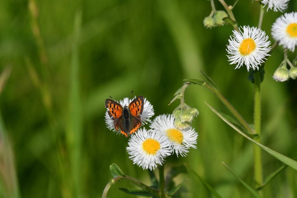 花と蝶MDCCCXLI!