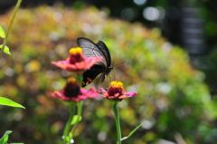 花と蝶MDCLXXXIV!