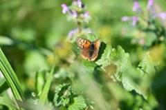 花と蝶CDLXVIII!
