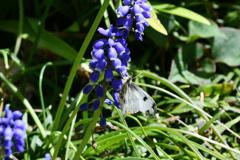花と蝶DXXII!