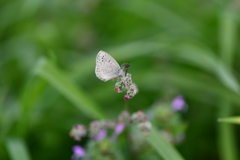 花と蝶CDLXXVI!