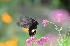 花と蝶MXLVI!