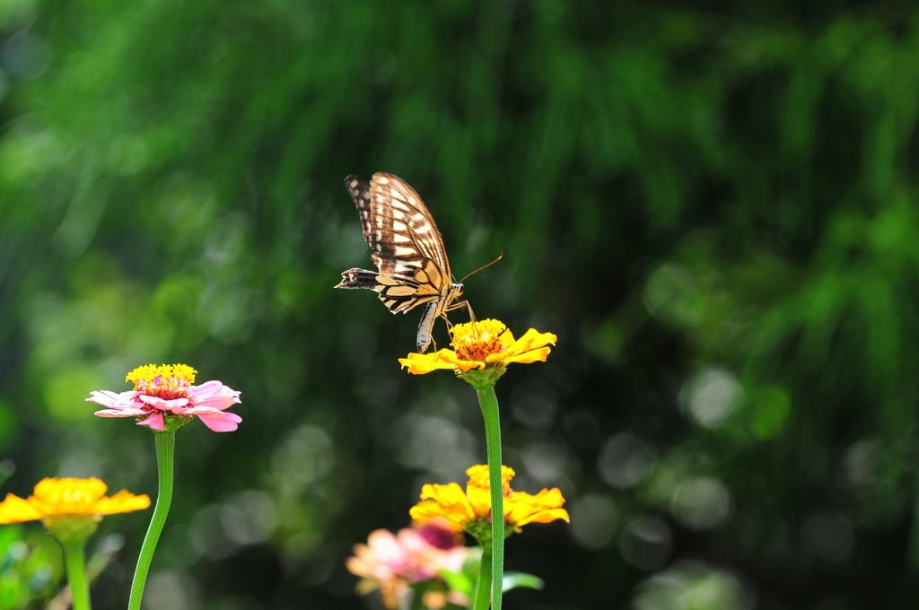 花と蝶MDLVI!