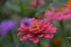 花と蝶MMCCLXI!