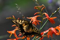花と蝶MCCCLXXXVI!