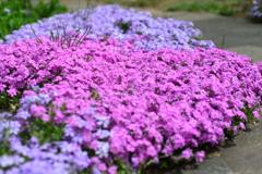 季節の花DCLXIV!