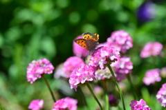 花と蝶MXL!