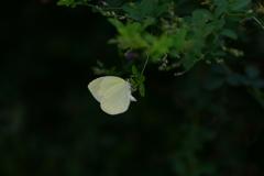 花と蝶MDCCXIX!