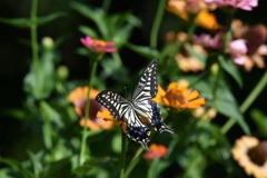 花と蝶MDCX!
