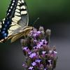 花と蝶DCCCXXXIV!