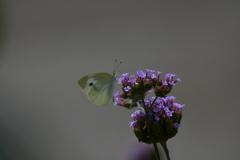 花と蝶MMCCLXXV!