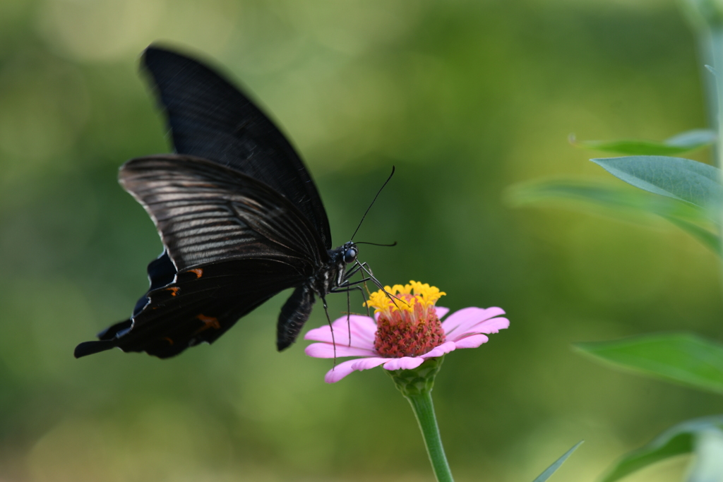 花と蝶MDXC!
