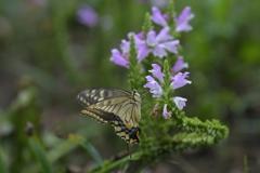 花と蝶MMCCLVIII!