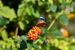 花と蝶MDCCCIV!