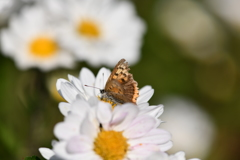 花と蝶CDLXXII!