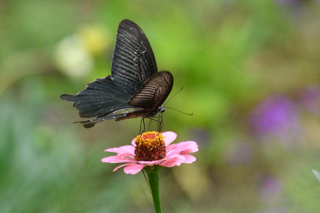 花と蝶MCDIII!