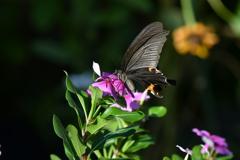 花と蝶MDCCI!