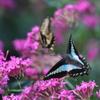 花と蝶MLXXXVII!