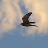 身近にいる野鳥CCLXII!
