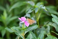 花と蝶MDCXXIII!
