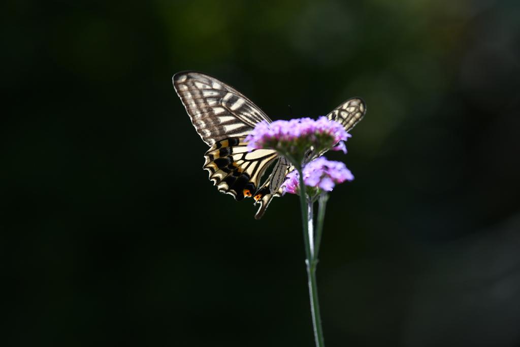 花と蝶MDXLVIII!