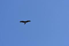 身近にいる野鳥CX!