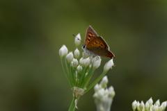 花と蝶DCCCLVIII!