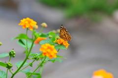 花と蝶MDCCXXVI!