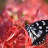 花と蝶CCCLXV!
