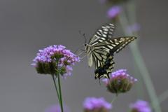 花と蝶MMCCLX!
