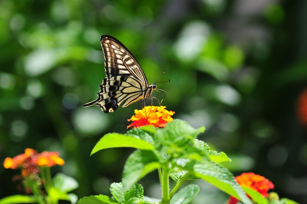 花と蝶MDCCCI!