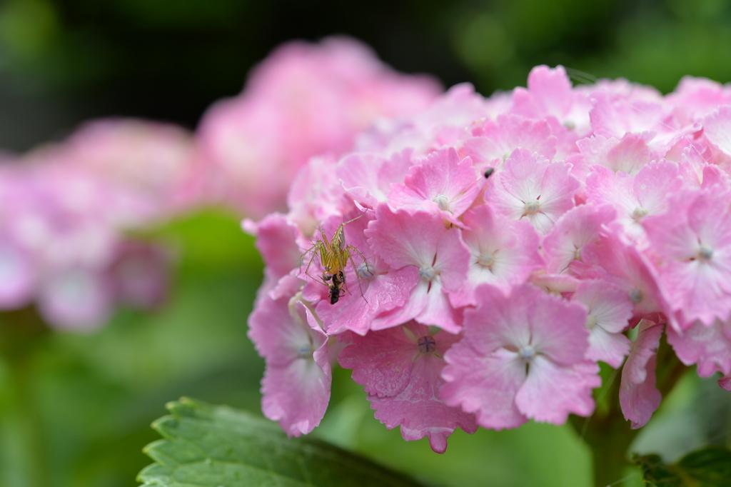 虫・昆虫と花CXLVII!