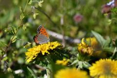 花と蝶DXVII!