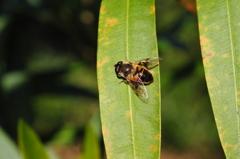 里山の昆虫LXVIII!