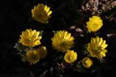 季節の花CCLXII!