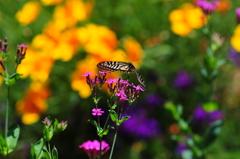 花と蝶MXLIII!