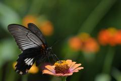 花と蝶MMCCLIV!