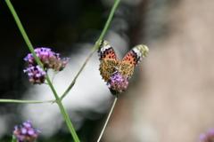 花と蝶MCCCLXXXIX!