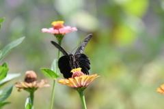 花と蝶MDCVII!