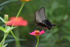 花と蝶MMCCLII!