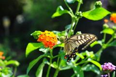 花と蝶CMXLII!