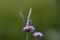 花と蝶DCCCLX!